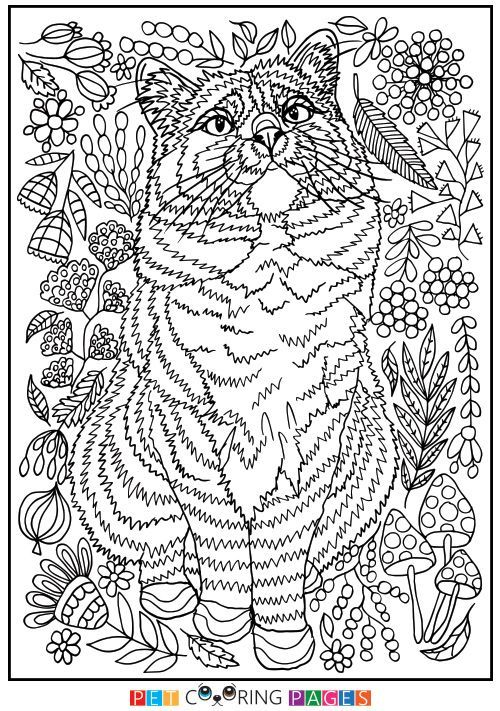 Free Printable Domestic Cat Coloring Page Iepa