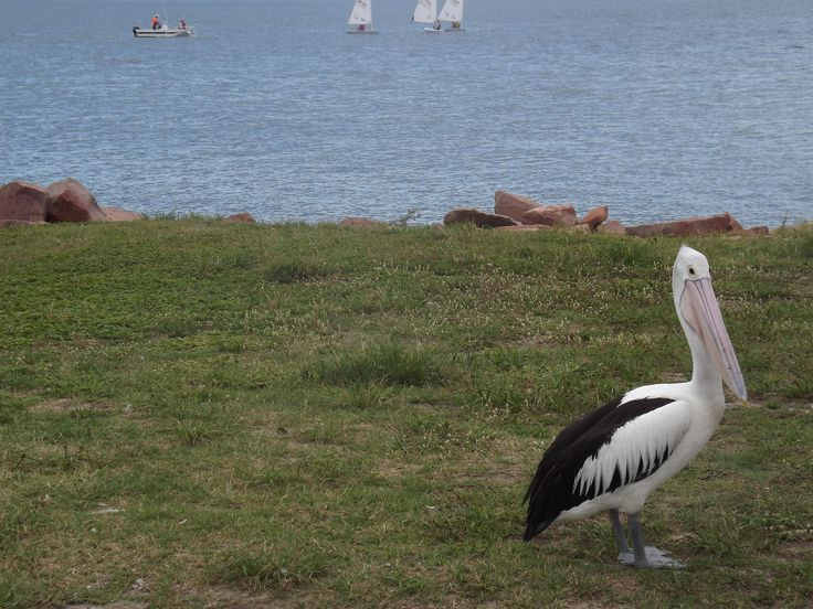 L1M1AP3: Rule of Thirds - ISO64, L4:3N, 1/350, F5.0, no flash, handheld.  Subject Pelican. Fujifilm Finepix S3200.