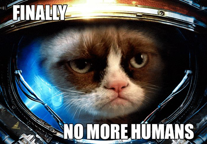 Grumpy Cat in Space (click on it to see animation :D )