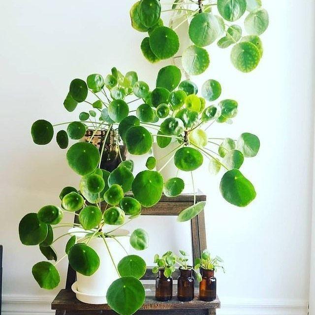 Plants Bibilo Designer Contemporary Homewares Store Australia Plants House Plants Indoor House Plants