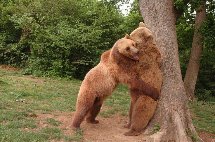 News & Blog | The Bear Sanctuary