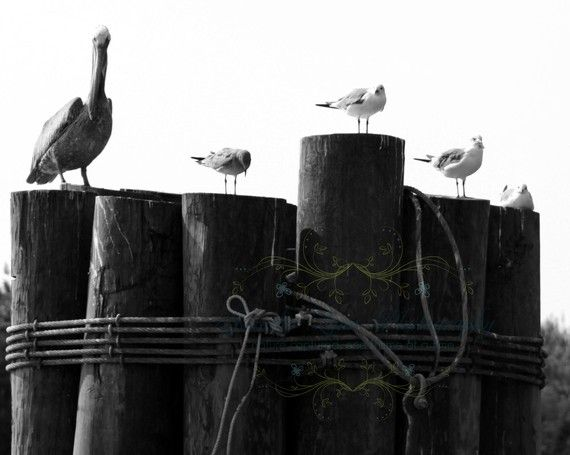 Birds of Southport - black & white - beach photography
