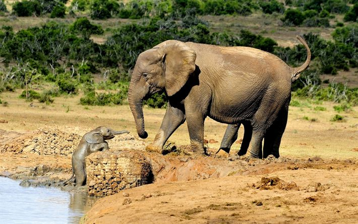Download wallpapers elephants, zoo, mother and cub, Africa