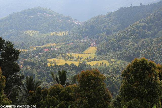 Les rizieres de Munduk