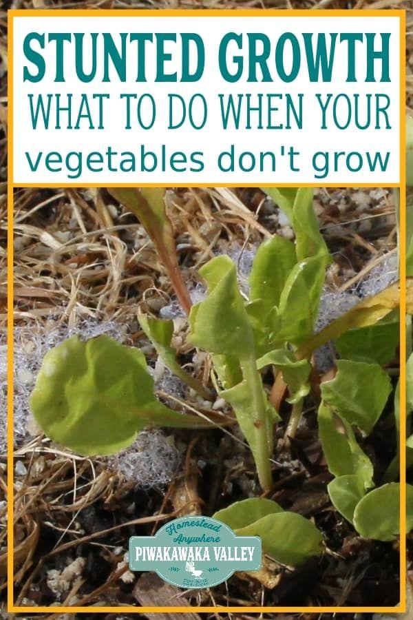 Garden Plants Growing Slow
