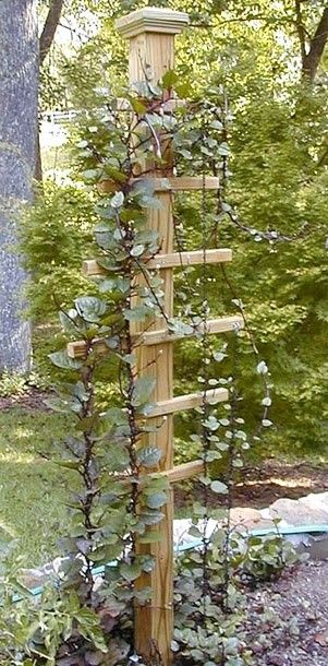 A great trellis idea for climbing vines! this would look great with a bird house on top of post! I know just where to get some!!