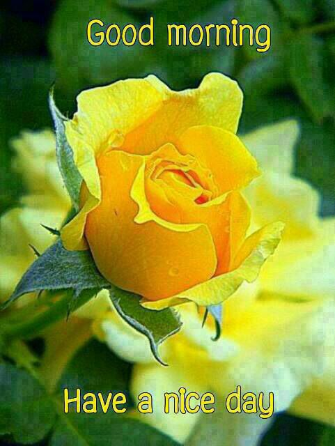 Good Morning Orange Flowers : Best images about happy monday on pinterest