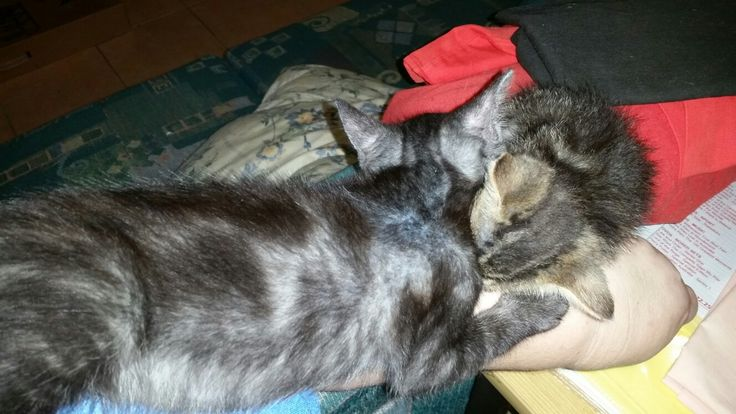 Getting nothing done at home because the furbabies decide your arm is part of the sleeping litter lol