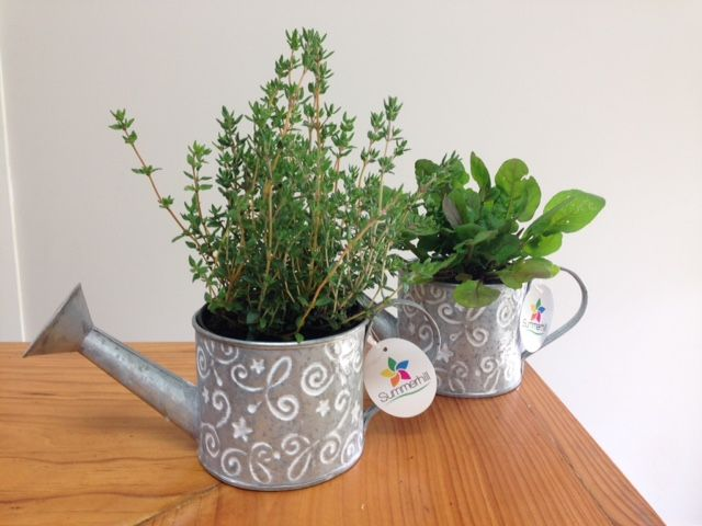 cute silver watering cans with mixed living herb range! basil, thyme, sage & rocket!
