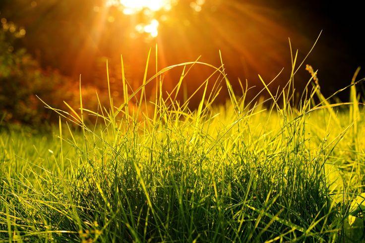 sunlight...