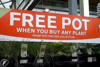 """Free Pot"" by Gary Woltal"