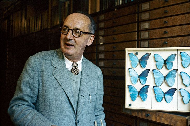 He made thousands of obsessive drawings of butterflies—but do they help us read his novels?