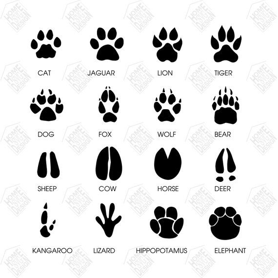 Paw Animal Svg Paw Animal Vector Paw Animal Digital Clipart For Design Print Or More File Inst Animal Footprints Tattoo Writing Fonts Animal Tracks