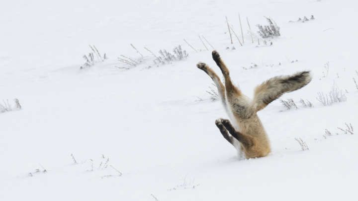 In case you needed to chuckle today. The Hilarious Winners Of The Comedy Wildlife Photo Awards 2016