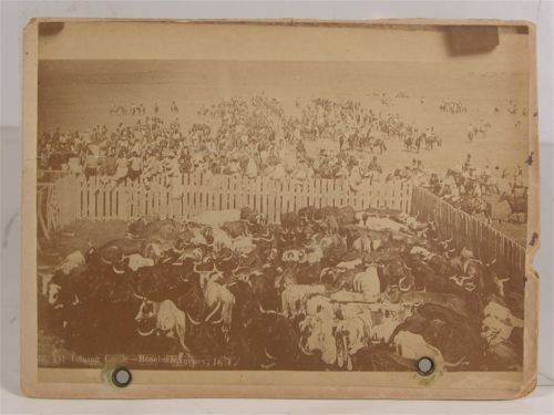 1891 Wounded Knee Indian Massacre Cabinet Card Photo of Agency Cattle Issue | eBay