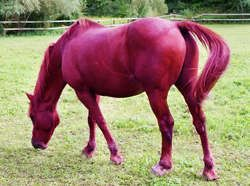 Rarest Horse in the World | Rare Horse Colors – The Facts