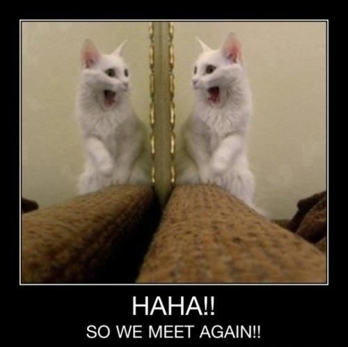 Need a good laugh after a long week? We bet these 15 funny kitty memes will absolutely crack you up! Give them a peek and see for yourself!