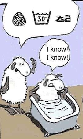 Lavage du mouton à la main...