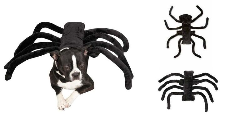 SPIDER COSTUMES FOR DOGS - Dress Up Your Pup to Look Like a Creepy Tarantula #ZackZoeyandRubiesPetShop