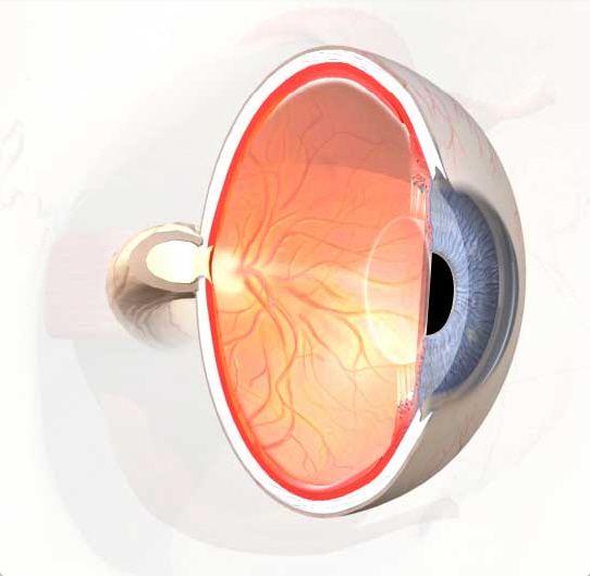 Eye Vitreous  U0026 Aqueous Humor Diagram  U0026 Function  With