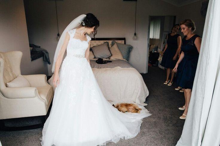 Wedding dogs, sausage dogs