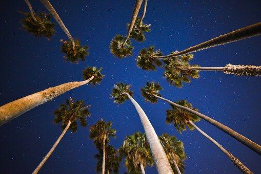 Пальмовые Деревья, Синий, Небо
