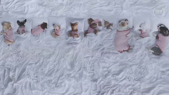 Instagram's most famous dogs remade Kanye's 'Famous' music video...and it's amazing