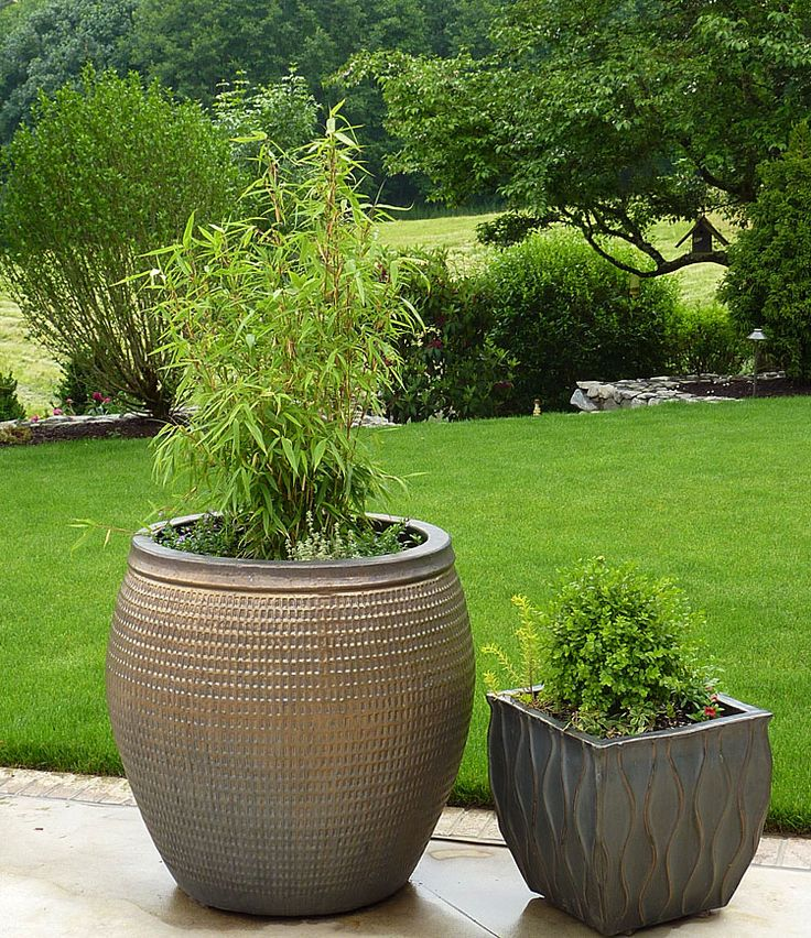 tree in a large pot - Google Search