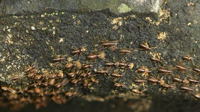 7 Common Signs Of Termite Decay