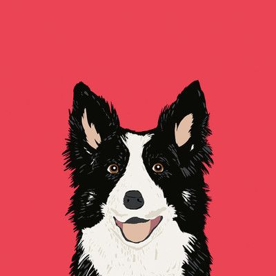 """East Urban Home Border Collie by Pet Friendly Graphic Art on Wrapped Canvas Size: 12"""" H x 12"""" W x 1.5"""" D"""