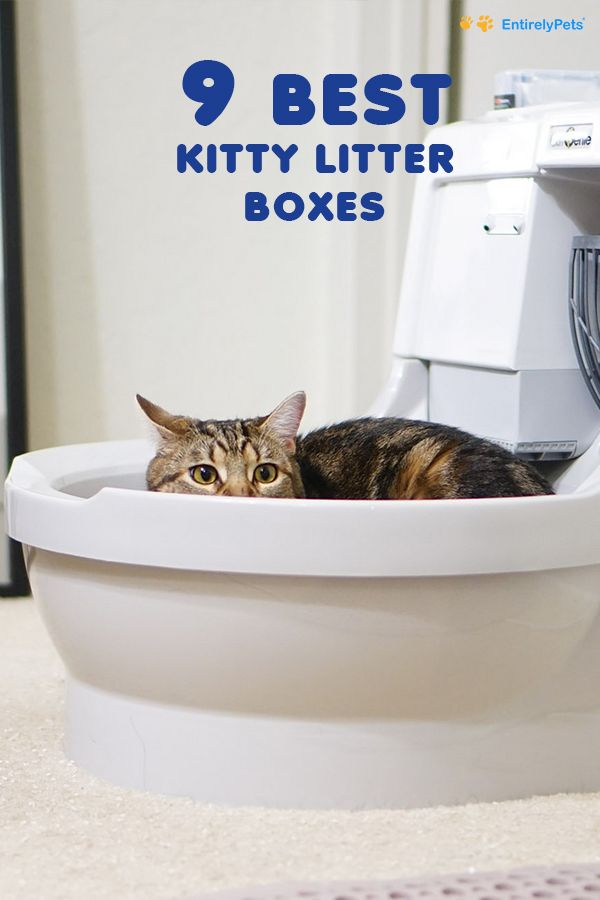 9 Best Kitty Litter Boxes 2019 Review Entirelypets Blog Cat Litter Best Cat Litter Cat Litter Box