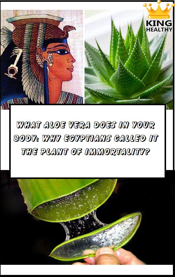 What Aloe Vera Does In Your Body: Why Egyptians Called It The Plant Of Immortality?