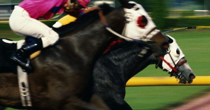 Por qué los caballos de carreras usan anteojeras. Los entrenadores de caballos tienen numerosas herramientas a su disposición que alientan los caballos de carreras a correr más rápido. Una de estas herramientas es un conjunto de anteojeras, usadas por el caballo como parte de una capucha de tela. La capucha tiene agujeros hechos para los ojos, que están apantallados de ambos lados por barreras ...