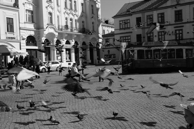 Cieszyn, Rynek, Gołębie.   Cieszyn, Market Square, Pigeons
