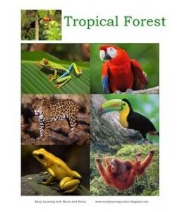 Animal Biomes... printables... science w1