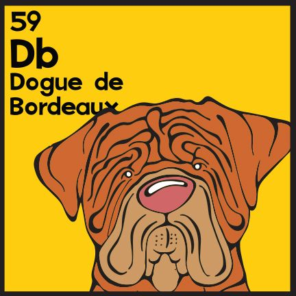 The 59th Elemutt of The Dog Table is the Dogue de Bordeaux.  The Dog Table Poster features illustrations of 186 dog breeds. Dogs are organized in a similar layout and structure to the Periodic Table.  #dogsoffacebook #DoguedeBordeaux BUY THE DOG TABLE POSTER  http://thedogtable.com