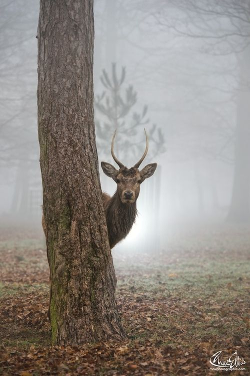 "0rient-express: "" Peekaboo 