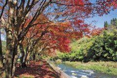 最近行ってなかった青井岳自然公園紅葉が色づくととってもきれいなところなんだよ 夏の間はキャンプ場や多目的広場とかで楽しめるんだけど11月中旬からは紅葉川沿いに歩道があってゆーっくり歩いて紅葉をじーっくり楽しむことができるんだ  そしてぜひ立ち寄っておきたいのが温泉 とろみのある名湯なんだ  tags[宮崎県]