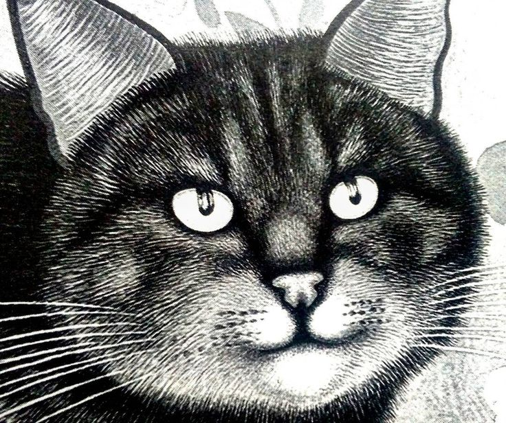 Best 25 Cara de gato dibujo ideas on Pinterest  Dibujo cara de