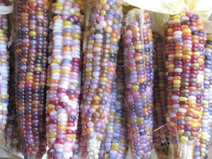 Holy Shit This Is Real Fucking Corn: Gems, Glasses, Indian Corn, Colorful, Food, Real Corn