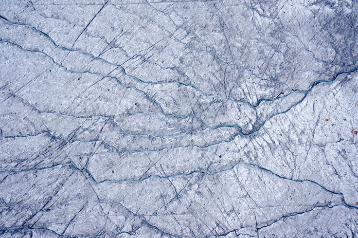 New research shows algae growing on the Greenland ice sheet the Earths second-largest ice sheet significantly reduce the surface reflectivity of the ice sheets bare ice area and contribute more to its melting than dust or black carbon.