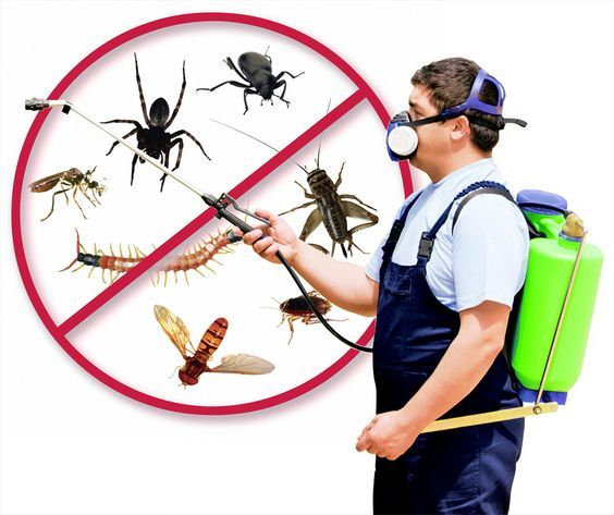 #pest control services #control all  of germs #infection for human