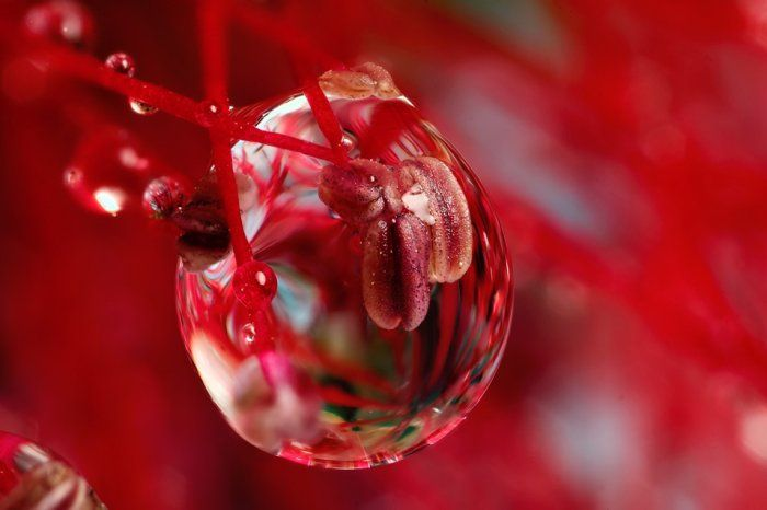 Red drop of water