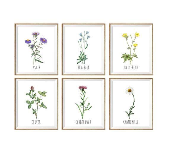 Botanical Chart Botanical Print Flower Art Print Floral Botanical Art Floral Wall Art Set Of 6 Fl Botanical Floral Art Floral Wall Art Flower Illustration