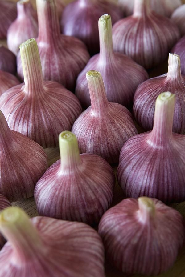 "Garlic Bulbs how beautiful is ""The Creaters Garden""  repinned by thecelestinecollection.com"