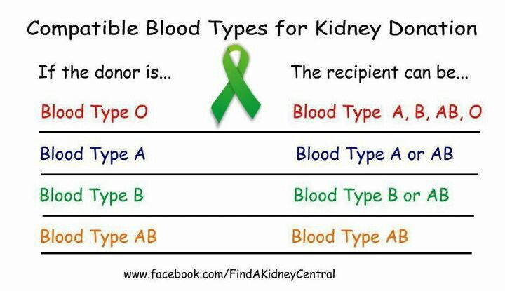how to become a living kidney donor