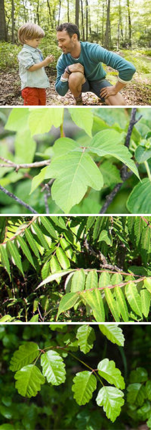 The Differences Between Poison Ivy, Poison Oak, and Poison Sumac - Learn how to recognize these pesky plants, where they grow, how to avoid them, and how to treat your child's rash if she comes into contact with any of them.