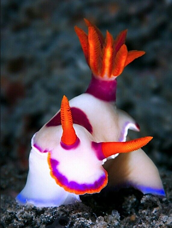 Sea snails - Zee naaktslak