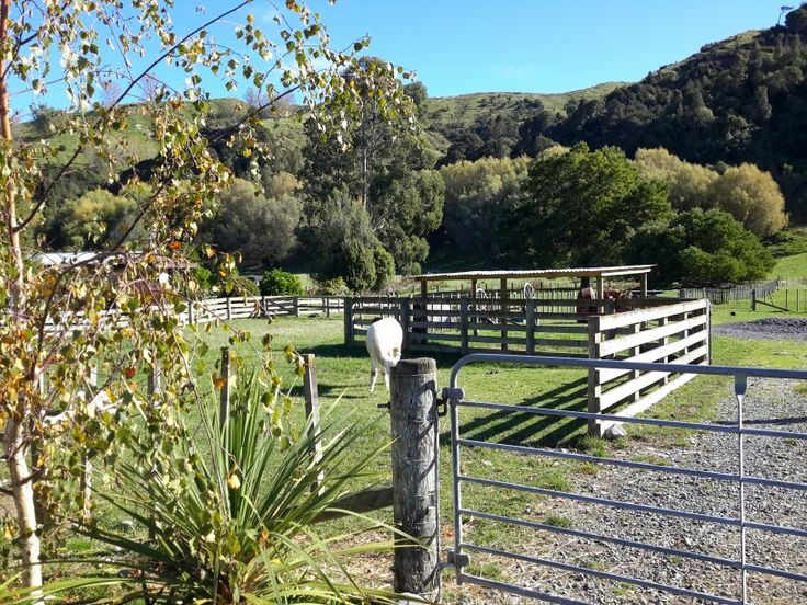 Farm scene, NZ