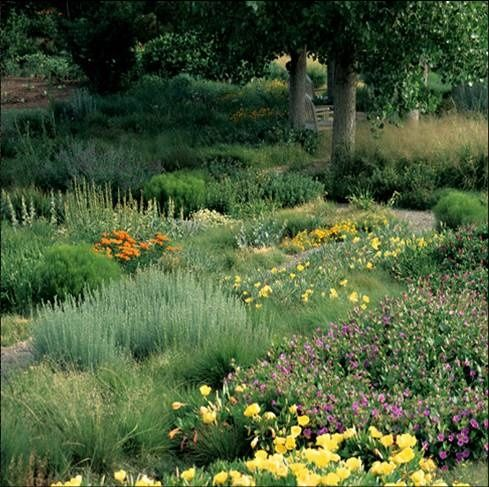173 best images about ground cover ideas on pinterest for Native plant garden designs